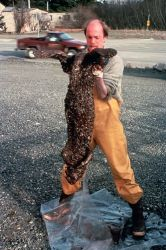 Dead Oil Otter Photo