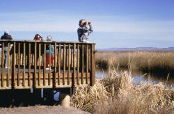 WO 8524 Bosque del Apache National Wildlife Refuge Photo
