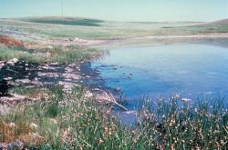 Oil Spill Into Wetlands Photo