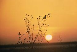 WO2433 Sunset at Tewaukoa NWR Photo