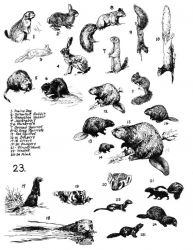 Mammals 23 (small mammals) Photo