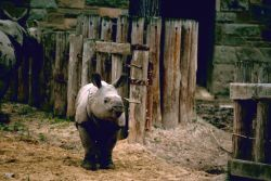 Indian Rhino Photo