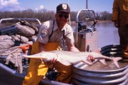 Pallid Sturgeon Capture Photo
