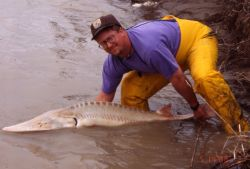 Pallid Sturgeon Release Photo