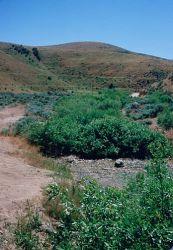 Willow Riparian Habitat in Idaho Photo