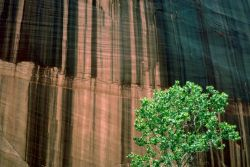 Canyon de Chelly National Monument Photo