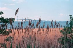 WO4233 Wetlands, Chesapeake Bay Photo