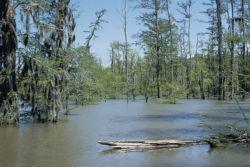 WO5207 Cypress Swamp, St. Catherine Creek National Wildlife Refuge Photo