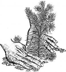 Plant A Tree Photo