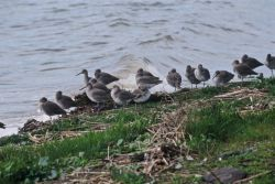 Willets Photo