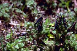 Lubber Grasshopper Photo