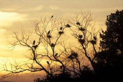 WO3971 Great Egret Photo