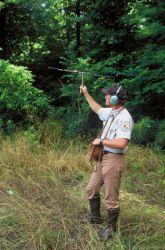 USFWS biologist tracking endangered Louisiana Black Bear Photo