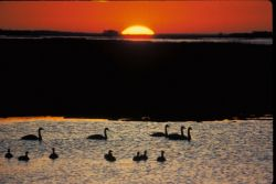 Sunset at Blackwater National Wildlife Refuge Photo