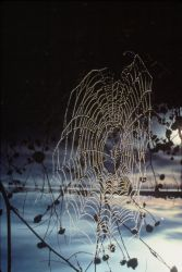 Spiderweb at Sunrise Photo
