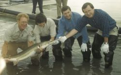 Pallid Sturgeon Photo