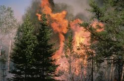 WO4810 Forest Fire in Colorado Photo