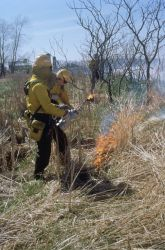 WO512 Prescribed Burn Photo