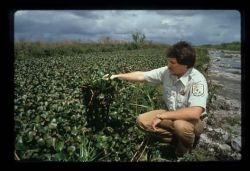 Water Hyacinth Photo