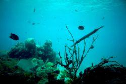 Coral Reef, Virgin Islands Photo