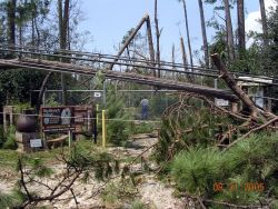 WOE176 Big Branch Marsh NWR after/before Hurricane Katrina Photo