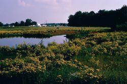 WO4325 Wetlands at Upper Choptank River in Delaware Photo