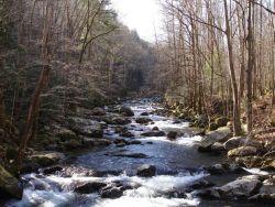 Baxter Creek Photo