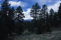 Roosevelt National Forest Photo