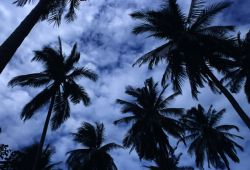 Palm Trees and Sky Photo