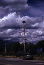 Osprey Nest on Telephone Pole Photo