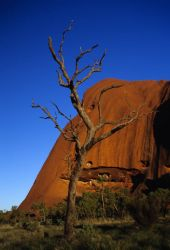 Tree in Front of Rock Formation Photo