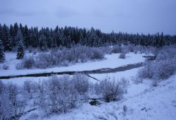 Stream Bordered by Snow-Covered Trees and Low-Lying Vegetation Photo