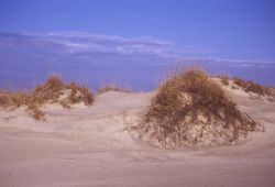 Grass-covered Sand Dune Formations Photo