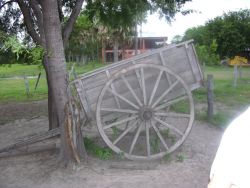 Ox cart Photo