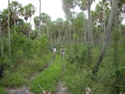 Road Through Palm Savannah in Pantanal Photo