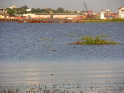 Wetland in Asuncion Bay Photo