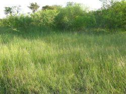Grasses in Flood Plain at Asuncion Bay Photo