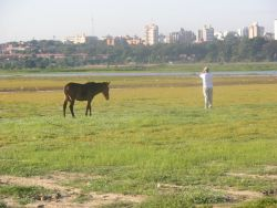 Asuncion Mule and Birdwatcher Image
