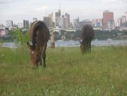 Asuncion Mule and Horse Image