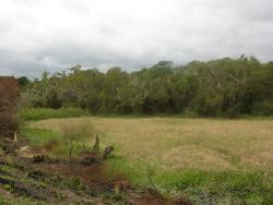 Wetland Along Levee in Southern Paraguay Photo