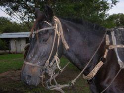 Paraguayan Horse Tack Photo