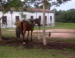 Paraguayan Horse Tack and Ranch Hand Photo