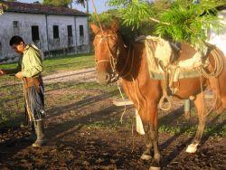 Paraguayan Cowboy Braiding Rawhide Photo