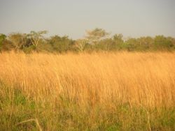 Grassland-Forest Ecotone Near Tebicuary River Photo