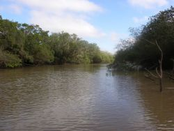 Tebicuary River and Gallery Forest Photo