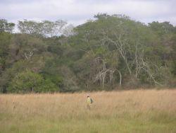 Grassland-Forest ecotone near Tebicuary river Photo