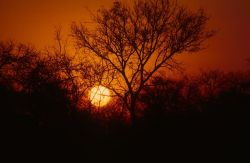 Sunset at Kruger National Park Photo