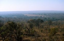 Kruger National Park Photo