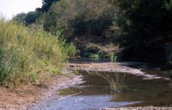 South Africa Stream Photo