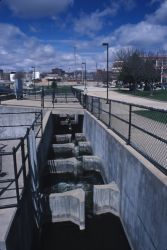 Fish Ladder Photo